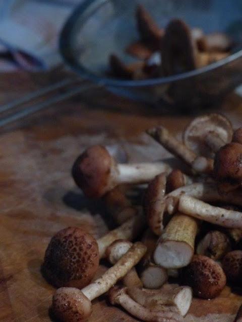 Pilze wanderung suchen Hallimasch Herbst