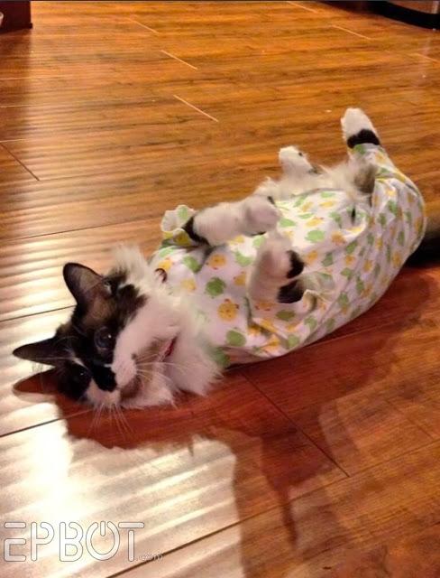 Epbot Quick Amp Easy Diy Cat Onesie For Over Grooming Kitties