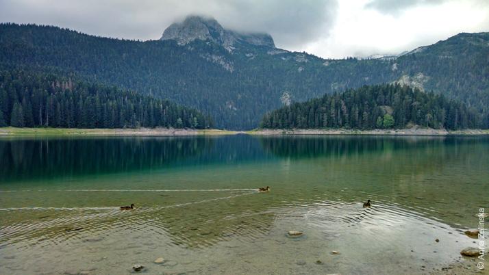 Утки в Черном озере, Черногория