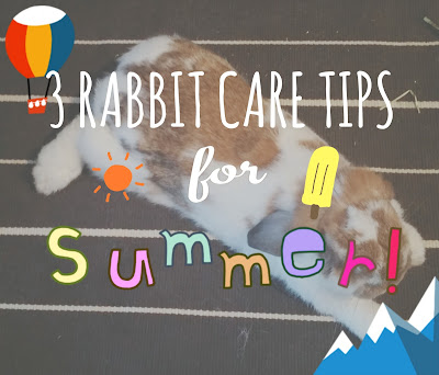 3 Rabbit Care Tips For Summer