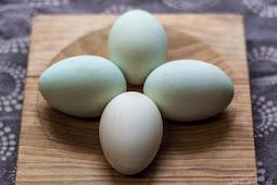 Manfaat Telur Bebek Sebagai Jamu Kuat Pria