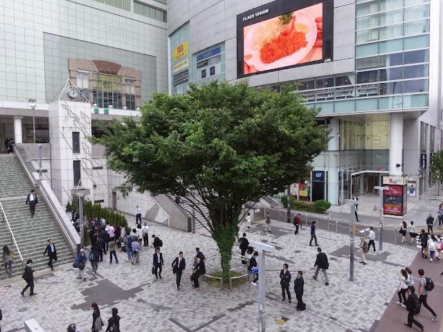 この木なんの木,新宿駅南口〈著作権フリー無料画像〉Free Stock Photos