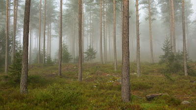 Când leadership-ul eșuează... suntem ca printr-o pădure în ceață - imagine preluată de pe commons.wikimedia.org