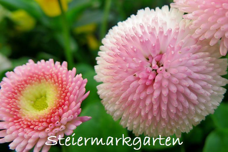 Tausenschön-Steiermarkgarten