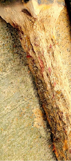 Deterioration of timber pile by marine bores