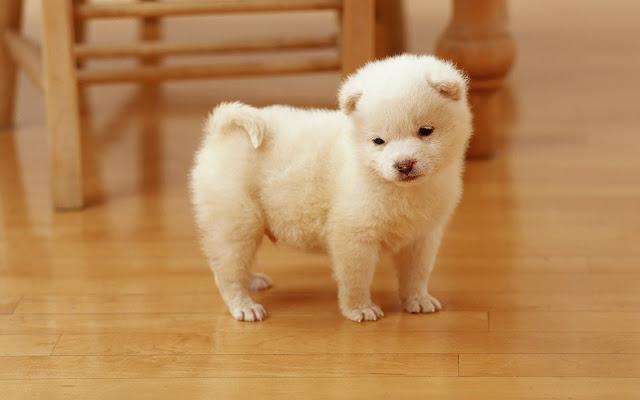 Schattig lief wit hondje