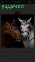 800 слов две лошади у которых одеты уздечки 1 уровень