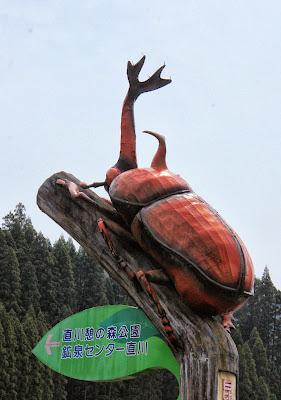 Giant Beetle, Kyushu, Japan