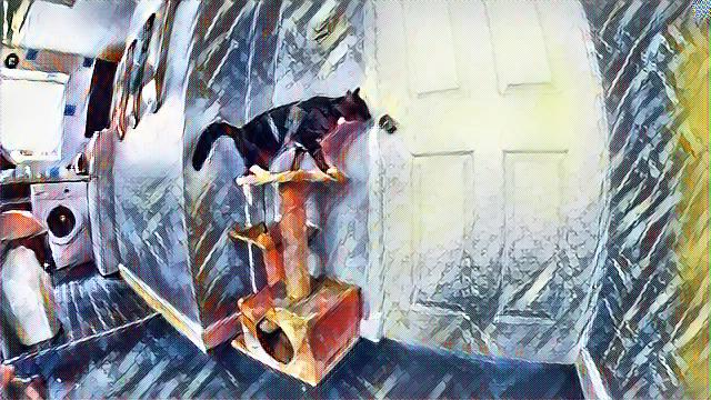 gato quiere abrir la puerta