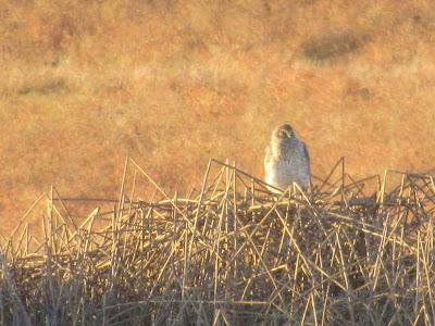 Llano Seco Wildlife Area California