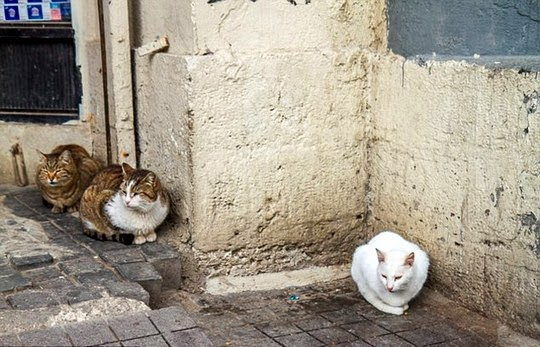 cats-in-istanbul