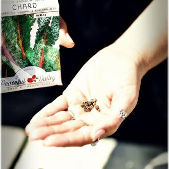 Heute Samen für Herbstkulturen