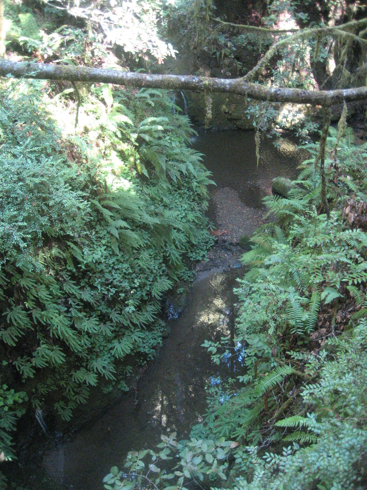 Santa Cruz Mountains Trails: Pescadero Creek County Park