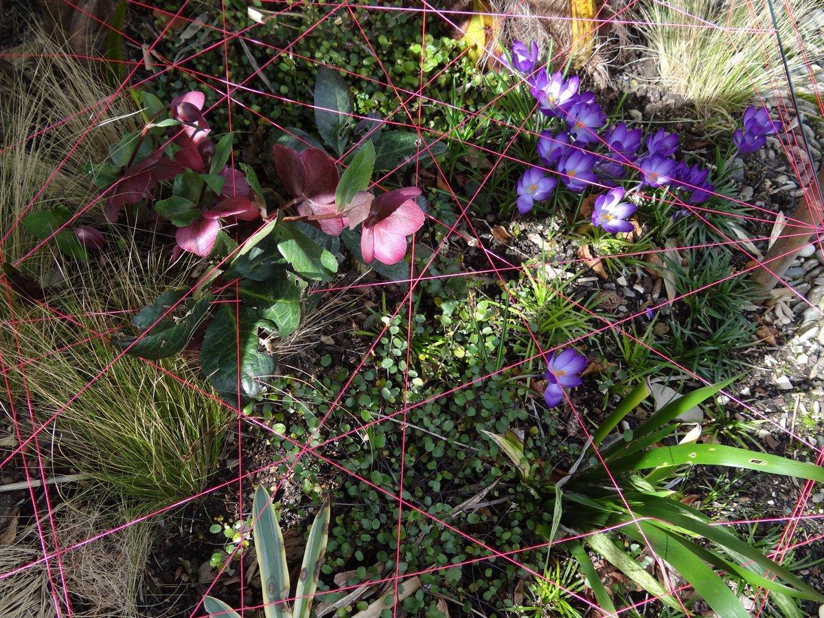 Jardin de b signoles couleur et graphisme au jardin for Au jardin des couleurs