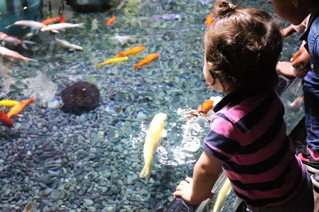 bassin-a-caliner-aquarium-paris