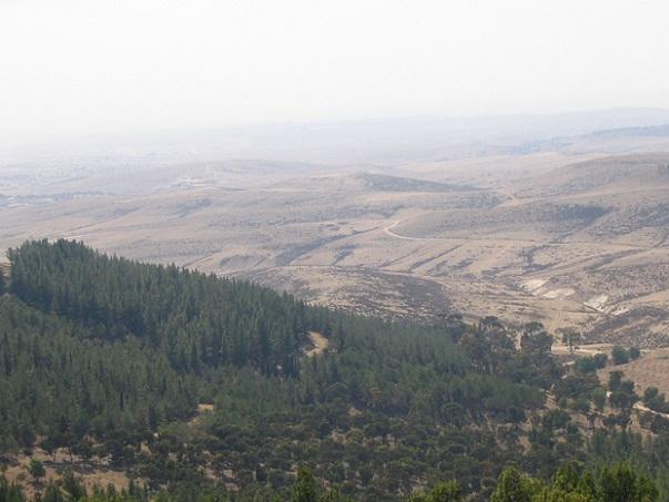 hutan+yatir+israel.jpg (603×453)