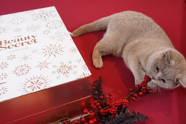 "LookFantastic - Adventskalender 2016 (""The Beauty Secret""), Katze, Britisch Kurzhaar, LFadventcalendar, advent, christmas"