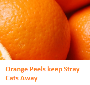- Oranges citrus fruit peel (Santre Ke Chilke)  Orange Peels keep Stray Cats Away
