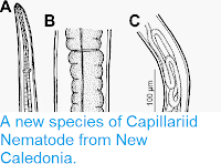 http://sciencythoughts.blogspot.co.uk/2015/03/a-new-species-of-capillariid-nematode.html