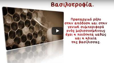 Αποσπάσμα από το DVD η μελισσοκομία βήμα βήμα. (Βασιλοτροφία)
