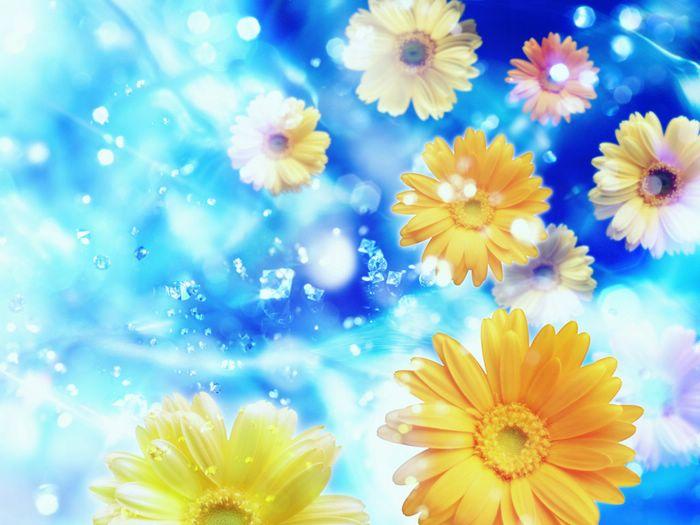 Cool Blue Wallpaper Hd Hd Iphone Amp Cute Desktop Wallpapers Colorful Folwers