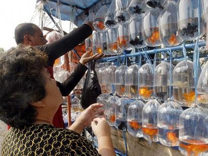 Tips Berburu Ikan Hias Murah Di Pasar Parung Ikan Ikan Cantik