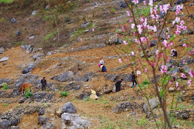 Life Sprouts From Rock Niches in Ha Giang 2