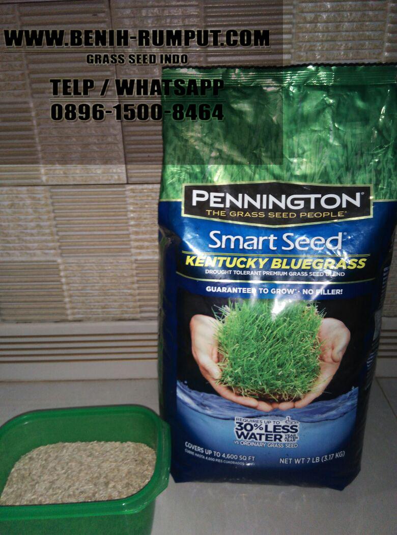 Jual Benih Biji Rumput Jakarta Timur Harga Murah Rumut Bermuda Lapangan Bola Bluegrass Dari Pannigton