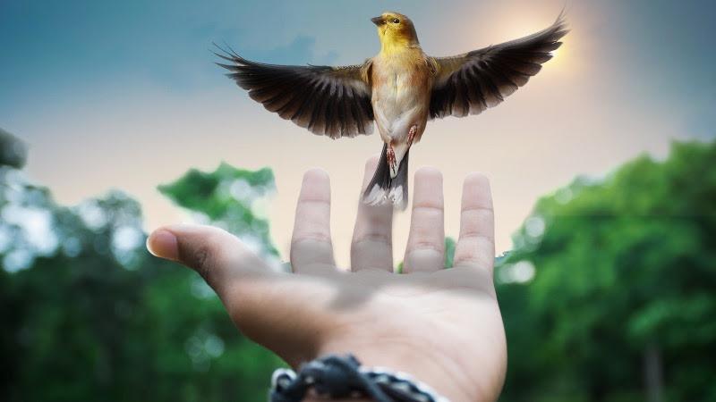 Little Bird Flying from Palm HD