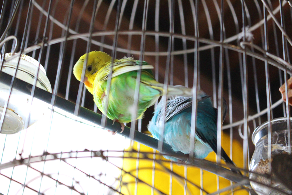 Birdcage in Hanoi, Vietnam - lifestyle & travel blog