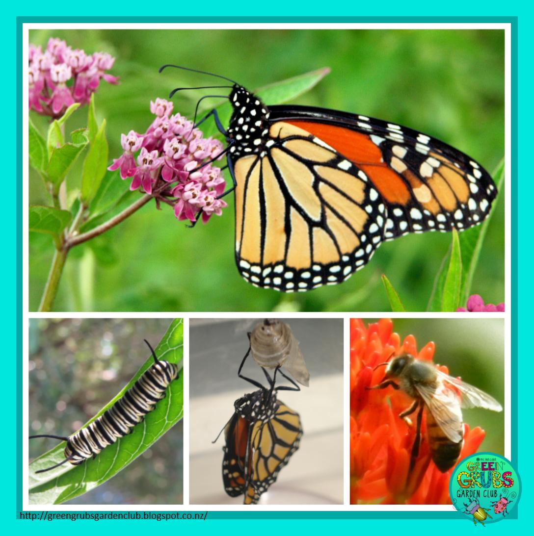 Design A Butterfly Garden Guest Post By Rosie Green