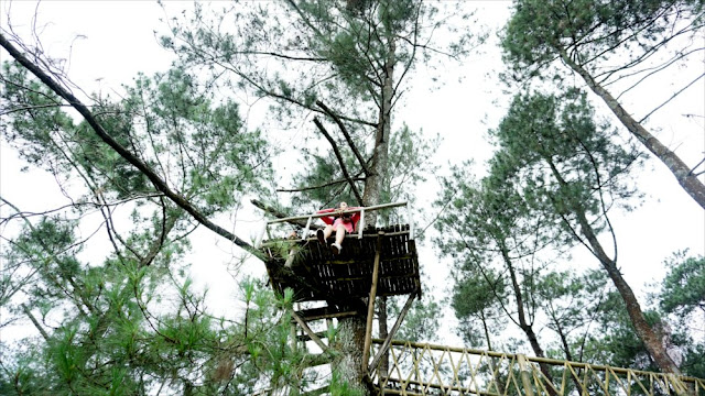 Rumah Pohon di Kampung Gogoniti