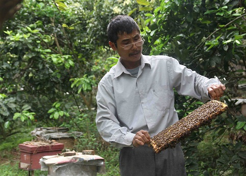 Honey makers profit from Lang Son flowers
