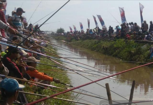Serunya Lomba Mancing Ikan Lele di Jepat Lor Tayu