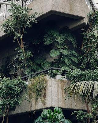 Choroba grzybowa roślin.
