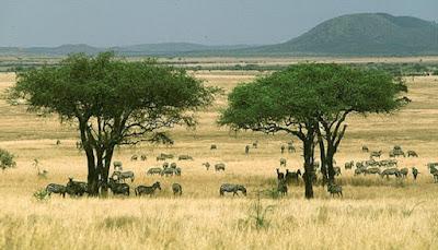 Pengertian hutan sabana dan ciri - ciri hutan sabana - berbagaireviews.com