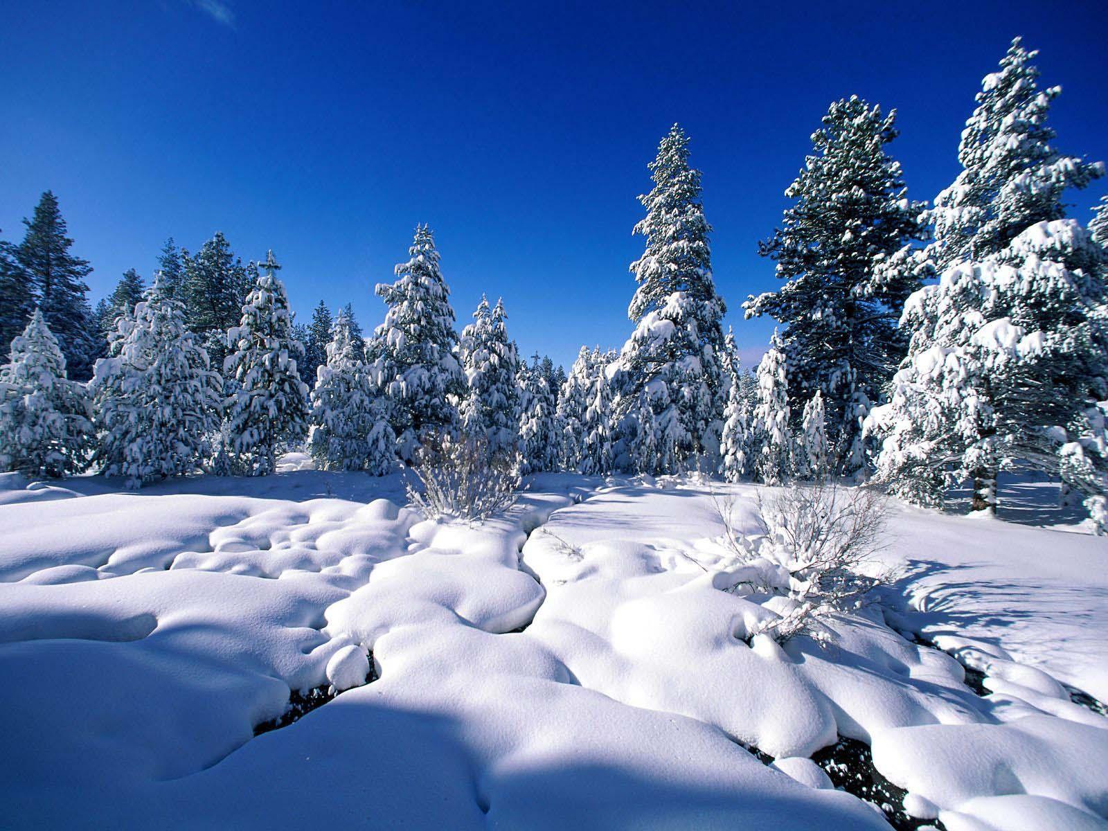 Winter wonderland 3d screensaver key generator