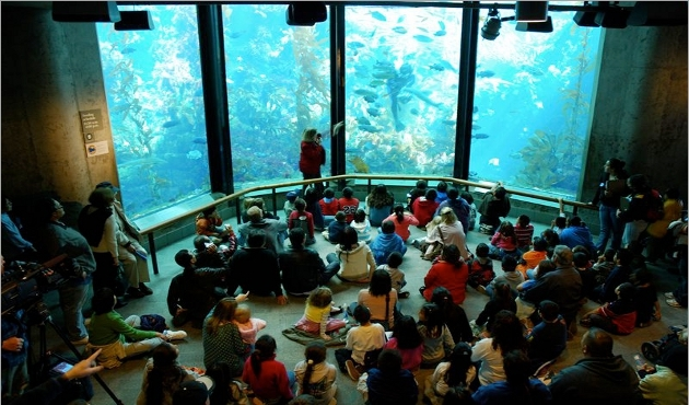 Sobre Monterey Bay Aquarium em Monterey