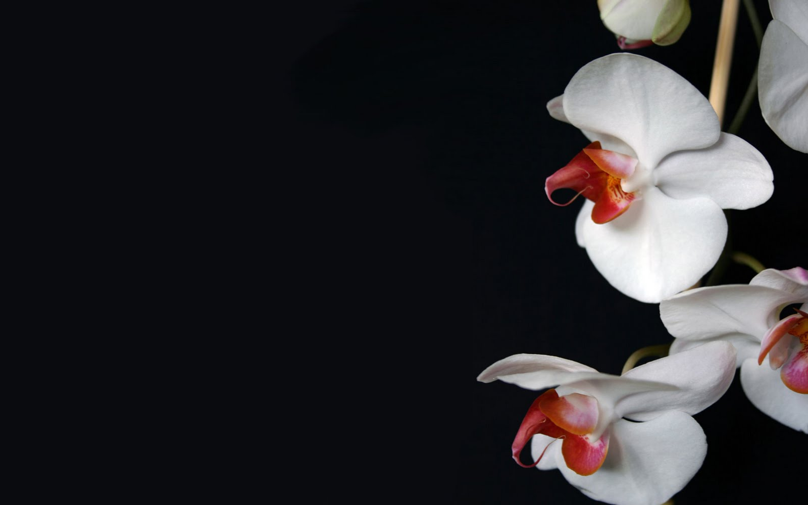 orchid wallpapers backgrounds images - photo #26