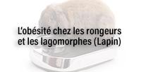 L'obésité chez les rongeurs et les lagomorphes (Lapin)