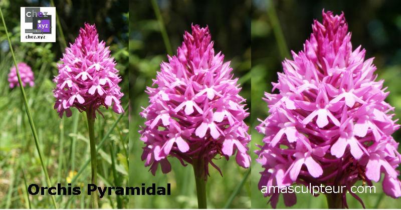 De la ficelle agricole et des fleurs de montagne par Ama
