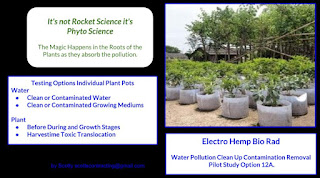 Water Pollution Clean Up Contamination Removal - Pilot Study Option 12A.   Testing Options Individual Plant Pots