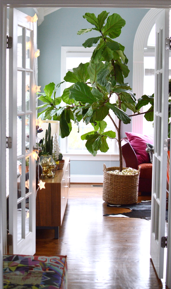 Holiday Touches and Fiddle Leaf Fig