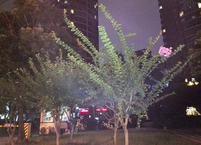木の枝一か所だけに咲く花