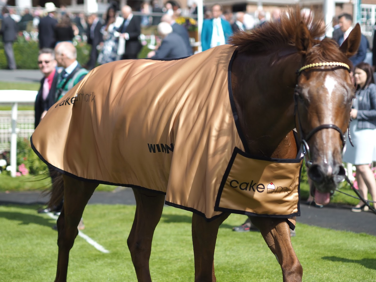 York races, Novoman in winners blanket