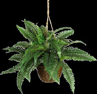 plantas,colgantes,png,cutaut,renders,tube,recursos,arquitectura,vegetación
