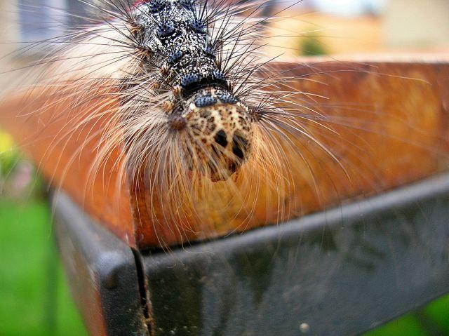 piękne gąsienice, motyle, przyroda