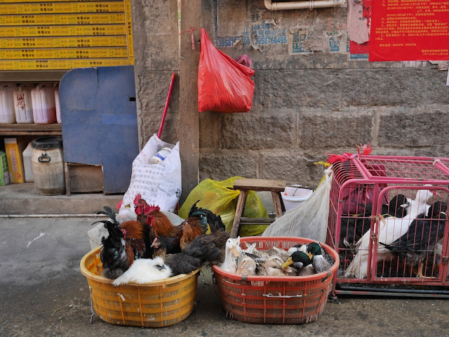 baskets full of live chicken and ducks on a street in Xiapu, China.