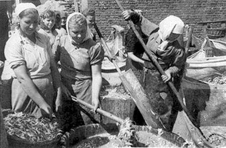 Рыбное производство в Керчи. Коса Целимберная, 1950-е годы