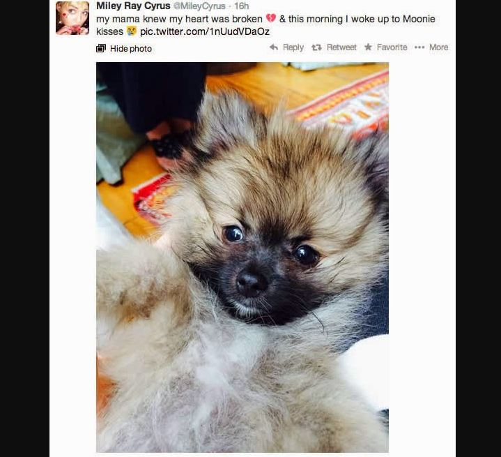 Miley Cyrus Tiene Nuevo Perro